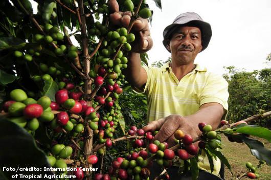 Implante um correto sistema de irrigação no cafezal e salve sua lavoura. Cursos CPT da área Agricultura