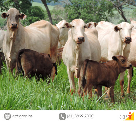 O Departamento de Zootecnia da UFV - MG desenvolveu softwares capazes de identificar quanto um bovino ingeriu de alimento e de água por dia
