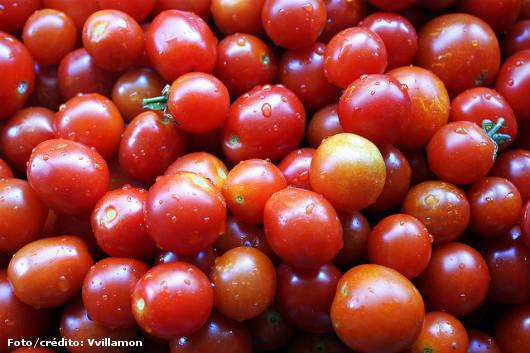 Tomate produzido especialmente para a indústria movimenta o campo. Curso CPT Produção de Tomate para a Indústria