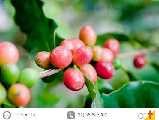 Falta de mão de obra para a panha do café faz com que agricultores capixabas desenvolvam método alternativo de colheita