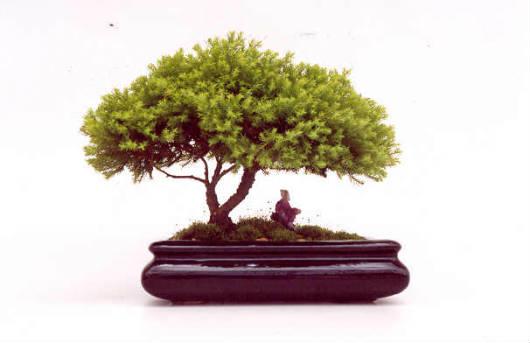 A educação na arte do Bonsai