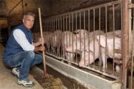 Pecuarista - conheça as vantagens da criação de suínos