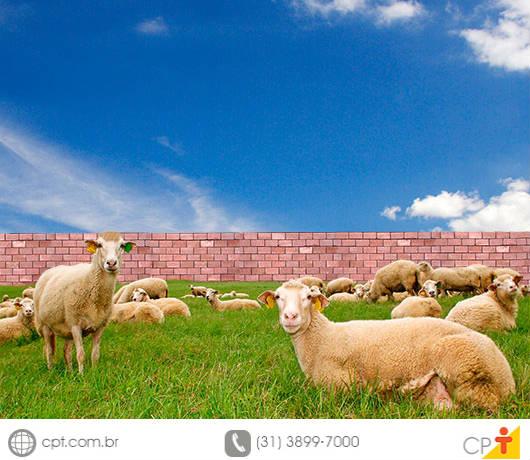 Você tem a mente de uma ovelha?