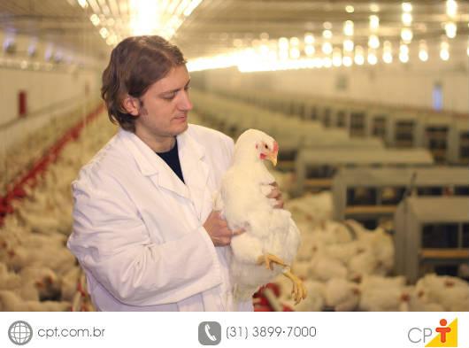 Granja de frangos de corte - recomendações para a correta vigilância sanitária. Cursos CPT da área Avicultura