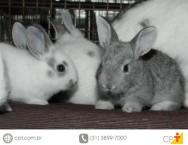 Como devem ser os galpões para criação de coelhos