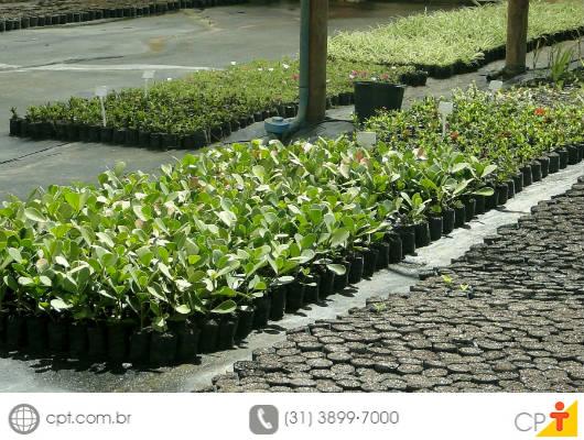 Para fazer mudas com sobras de jardinagem, opte por espécies que irão atingir o ponto de comercialização mais rapidamente e sejam de mais fácil manejo