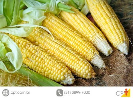 Em período de escassez de chuva, uma excelente alternativa de alimentação para o gado é a ensilagem ou silagem
