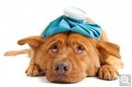 Aprenda Fácil Editora: O que fazer quando seu cão fica em estado de choque?