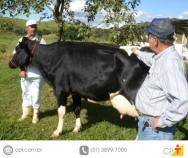 Concurso de vacas leiteiras - qualidades do juiz e ética profissional