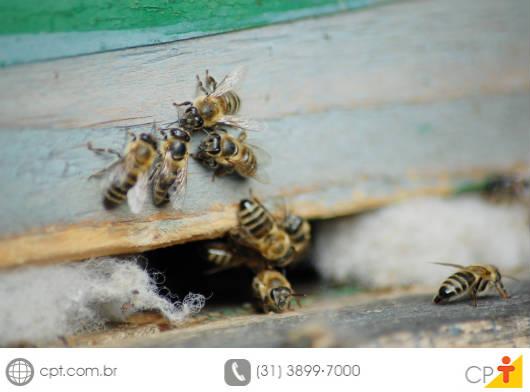 A maior produção da apicultura migratória acontece devido ao aumento no número de colheitas de mel