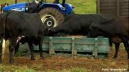 Cocho móvel e ecológico desperta o interesse de criadores de gado
