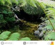 Recuperação e conservação de nascentes durante a estação seca