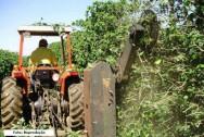 Poda radical recupera lavouras de café em MG e salva a lavoura de 2016