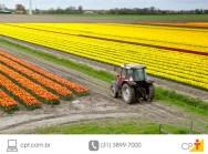 Com a chegada da primavera, cultivo de flores destaca-se no sul do Brasil