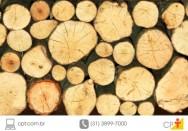 Como desidratar madeiras resinosas