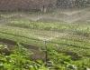 Técnicas de manejo que são eficientes na hora de irrigar
