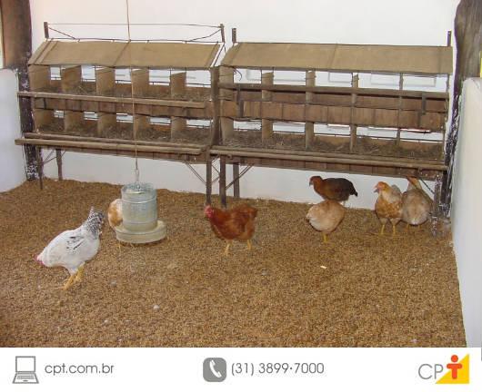 A cama aviária
