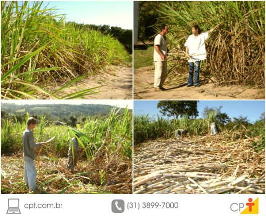 A cana-de-açúcar é uma cultura bastante exigente no quesito temperatura e água, requerendo também alguns cuidados na colheita