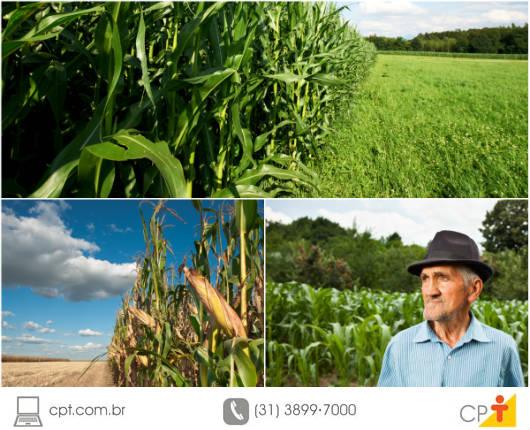 A época de plantio do milho é um dos fatores mais importantes a serem observados pelo agricultor