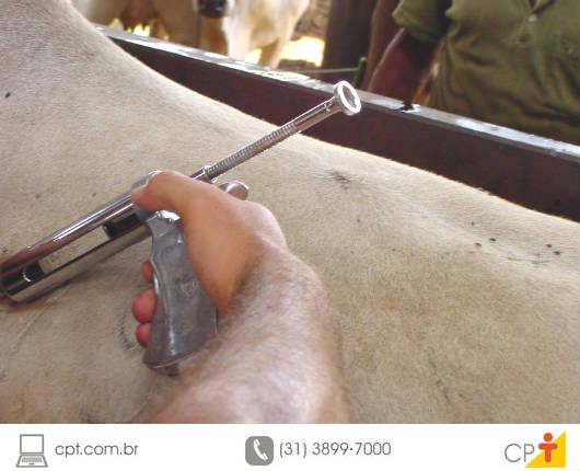 À medida que os bovinos recebem um bom manejo sanitário, vão sendo reduzidas as possibilidades de ocorrência de doenças relacionadas à reprodução