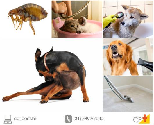 Se seu pet apresenta coceira excessiva, perda de tufos de pelo, feridas ou vermelhidão, ele pode estar infestado de pulgas