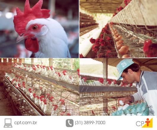 Para obter e manter uma elevada produção de ovos, é necessário manter o consumo de alimento em um nível alto