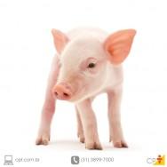 Como se prevenir da coccidiose suína