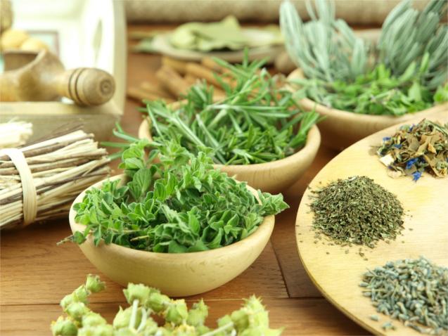 Plantas usadas na medicina veterinária