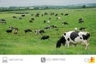 Leite a pasto - identificação dos animais e escrituração zootécnica