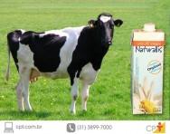 Produção de leite orgânico: qualidade do leite e segurança alimentar