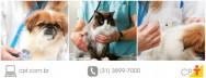Serviços veterinários têm novas regras, confira!