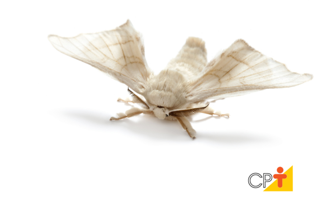 Criação do bicho-da-seda