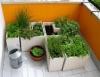 Horta caseira pode ser implantada em pequenos espaços ou mesmo em recipientes