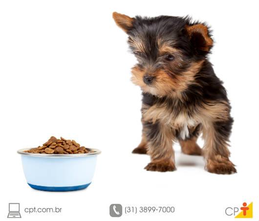 Pet comida natural para cães