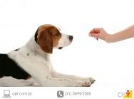 Adestramento - como os cães aprendem?