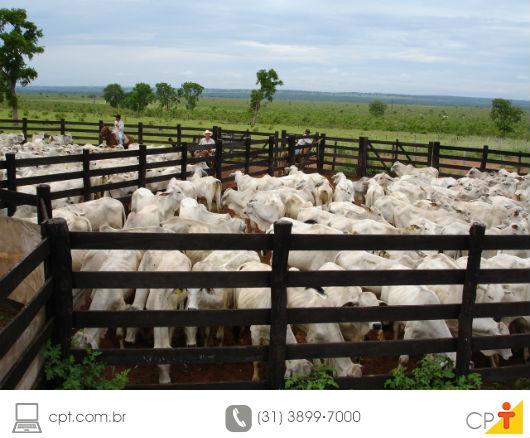 foto de gado de corte em confinamento