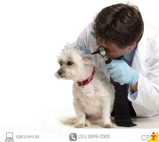 Veterinário examinando a orelha de um cão