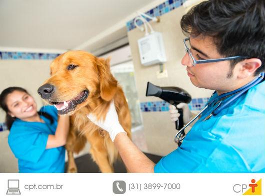 funcionários de pet shop dando banho em um cão