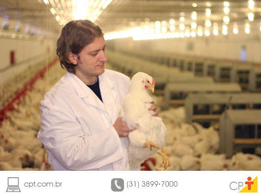 avicultor examinando um frango em sua granja
