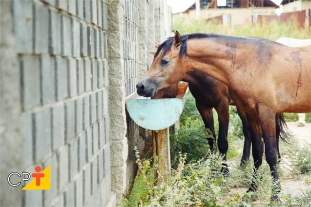 Cavalos alimentação