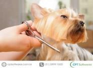 Pet shop: benefícios do software de gestão