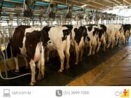 Planejamento e tecnologia - o segredo para obter bons lucros com a produção de leite