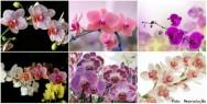 Produção de orquídeas firma-se como excelente opção de investimento