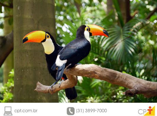 foto de dois tucanos soltos na natureza