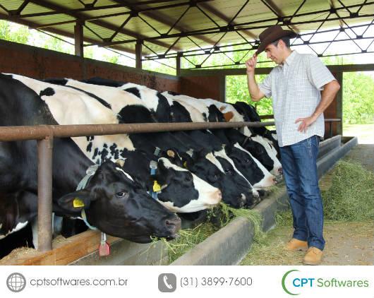 Dicas para comprar gado