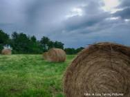 Feno - alternativa de alimento para o gado na seca