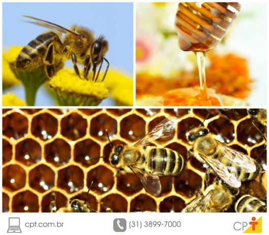 O segredo da durabilidade do mel