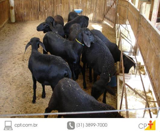 Cartilhas orientam produtores de caprinos e ovinos