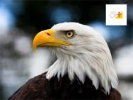 Visão de águia - você tem?