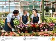 Produtor de flores economiza água com irrigação por alagamento